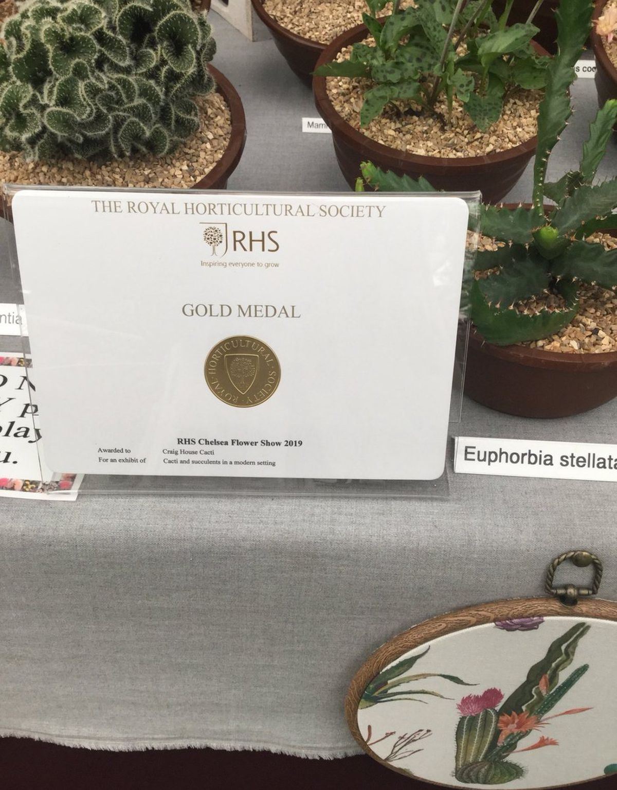 Craig House Cacti shared a photo on their Twitter page of their gold medal from Chelsea Flower Show