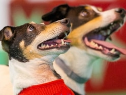 National Pet Show returning to Birmingham