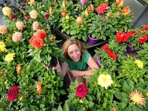 Penny Simkin promotes the Every Day is a Dahlia Day initiative at Essington Farm, Wolverhampton