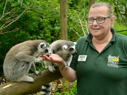 Dudley Dudley Zoo celebrates spring baby boom