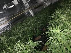More than 200 cannabis plants discovered at Walsall property
