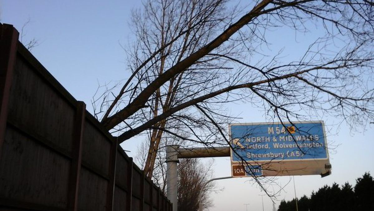 The felled tree. Photo: Highways England