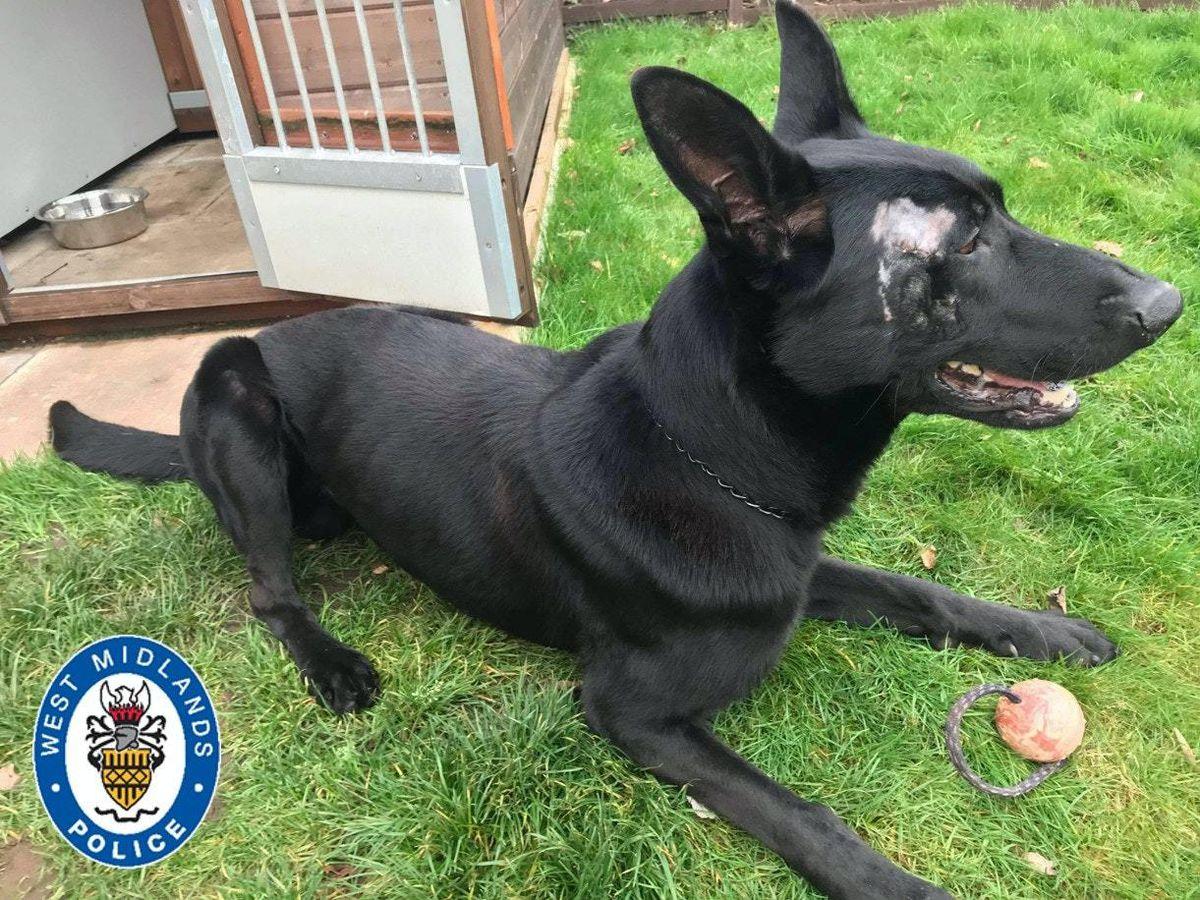 Police dog injured in machete attack