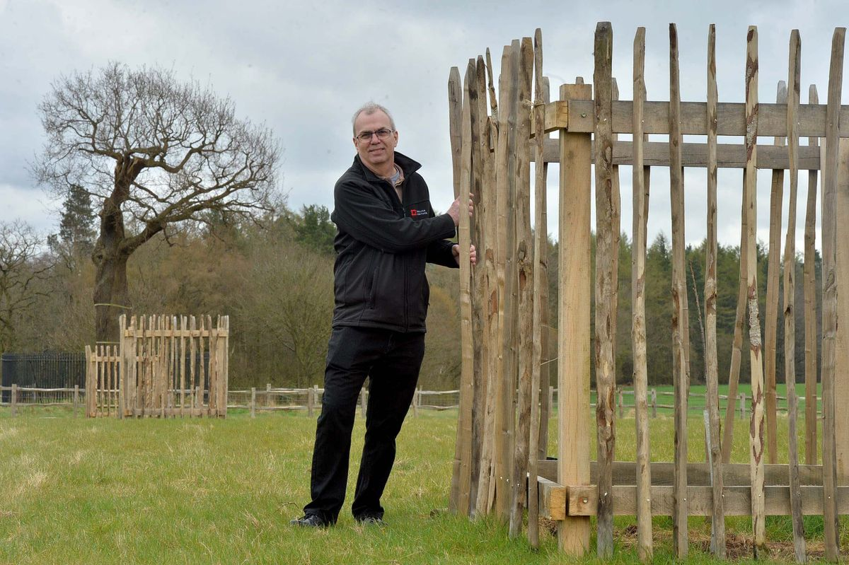 New trees have been planted around the famous Royal Oak