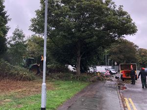 Land off Hunter Road car park where trees have been removed
