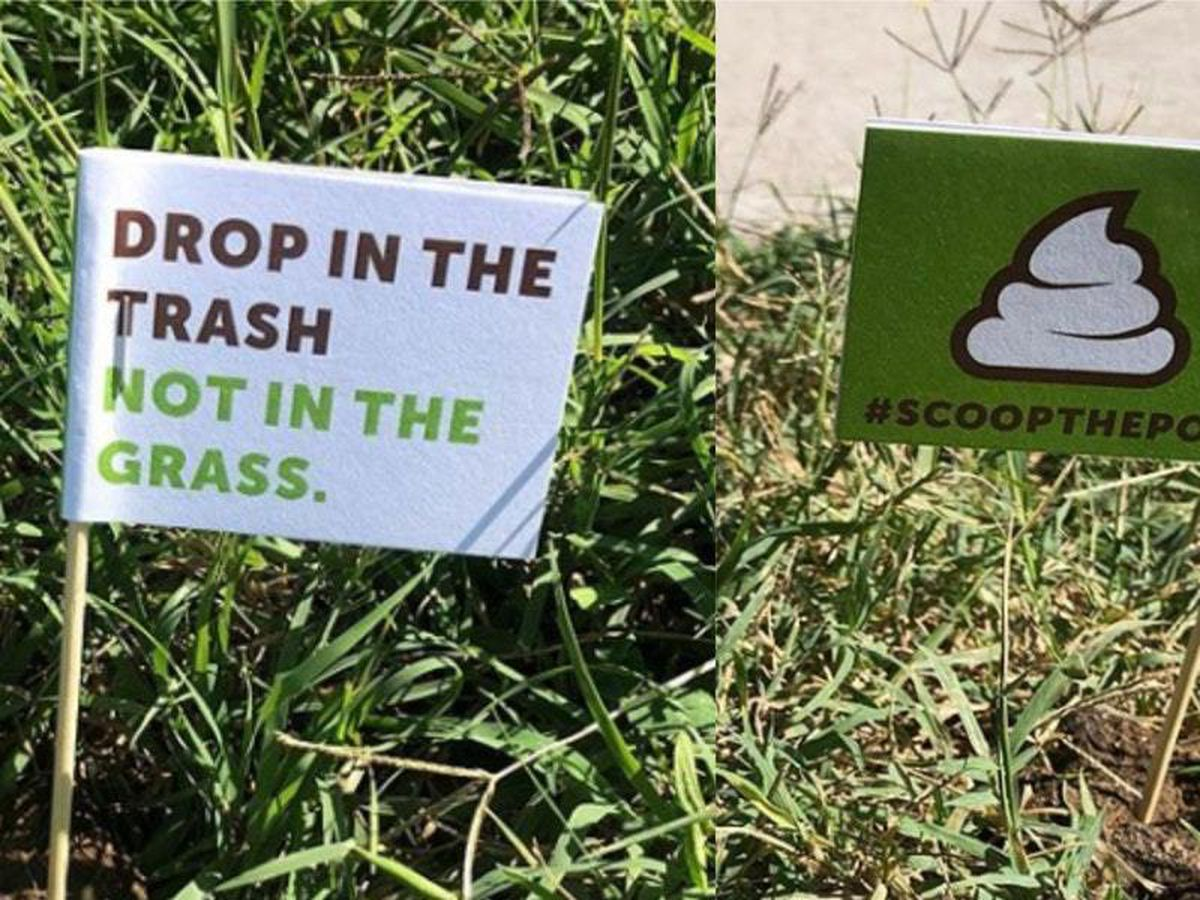 Police place flags in dog poo to encourage owners to pick up after their pets