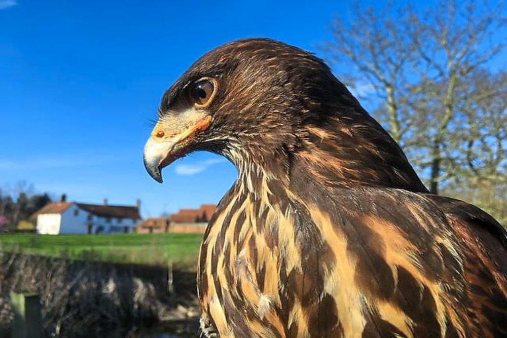 Image result for falconry raf museum