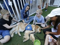 Jacob the comfort dog is helping the Florida community affected by a mass school shooting