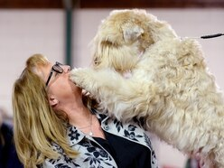 GALLERY: Thousands attend National Terrier Show in Stafford