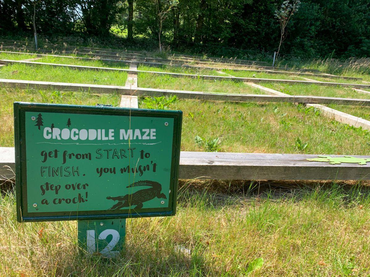 The crocodile maze