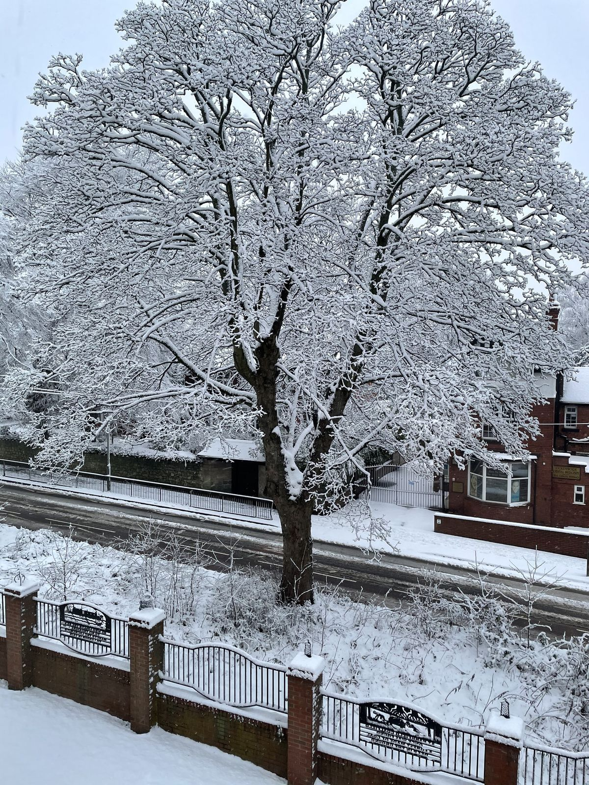 Darren Ford took this Christmas card-style photo of a frosty tree outside his home on Goldthorn Hill, Wolverhampton