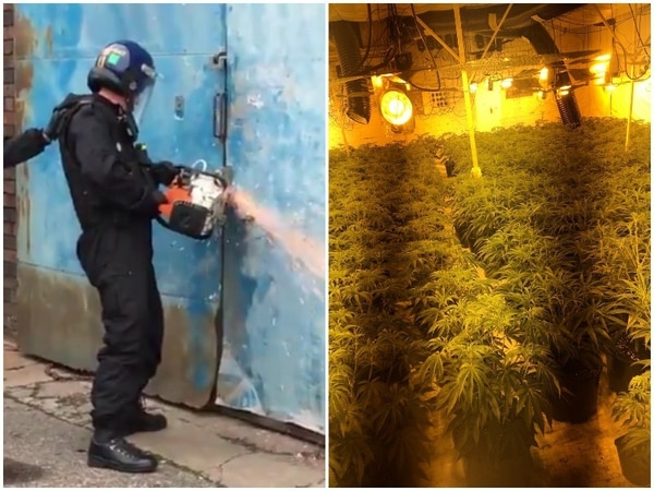 Huge cannabis haul found in Wolverhampton factory unit worth £2.5m