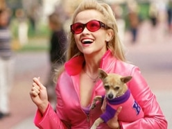 Legally Blonde: Test your knowledge on the film as the musical runs in Wolverhampton