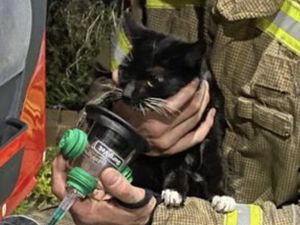 The cat was given oxygen after the fire. Photo: West Midlands Fire & Rescue Service