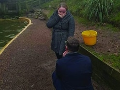 Visitor p-p-pops the question in Dudley Zoo penguin enclosure