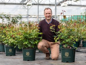 Mr Austin's son David Austin Jr with the new rose varieties that will be on show at Chelsea