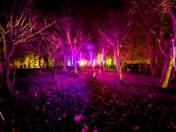 National Memorial Arboretum to host illuminations event