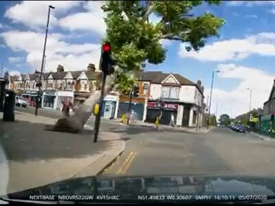 Collapsing tree narrowly misses pedestrians at London crossroads