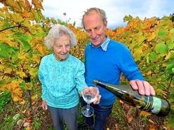 Pattingham grape-picker Ann still reaping harvest at 97