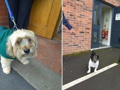 Dogs at polling stations: Pooches star in paw-fect General Election Twitter trend