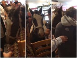 'It's an 'oss in the pub!' - WATCH moment man brings horse into Wetherspoons