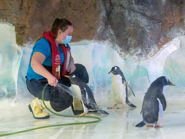 Penguin enclosure cleaned