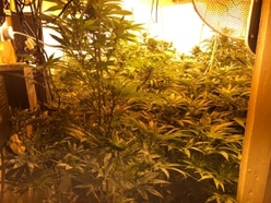 300 cannabis plants found inside Black Country house