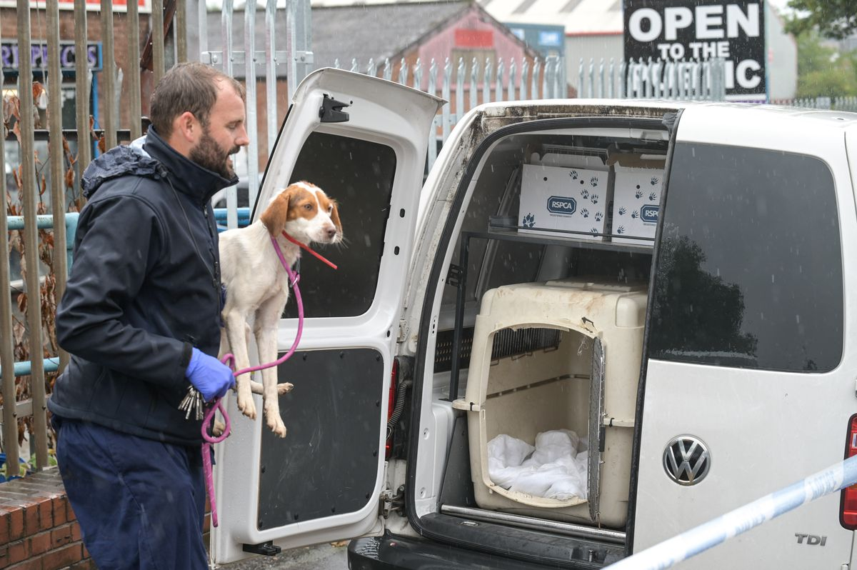 RSPCA officers took many of the animals into care. Photo: SnapperSK