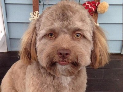This dog has an oddly human-like face and people are shocked