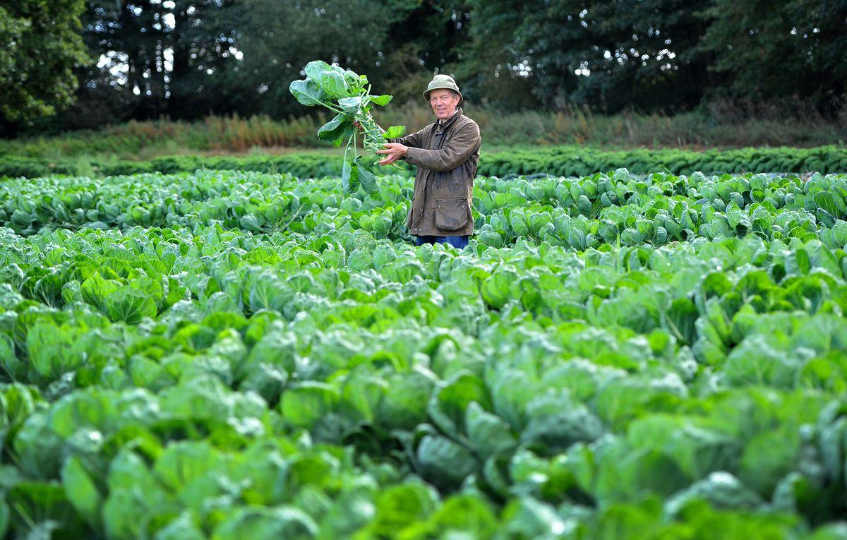 Richard Simkin à Essington Farm