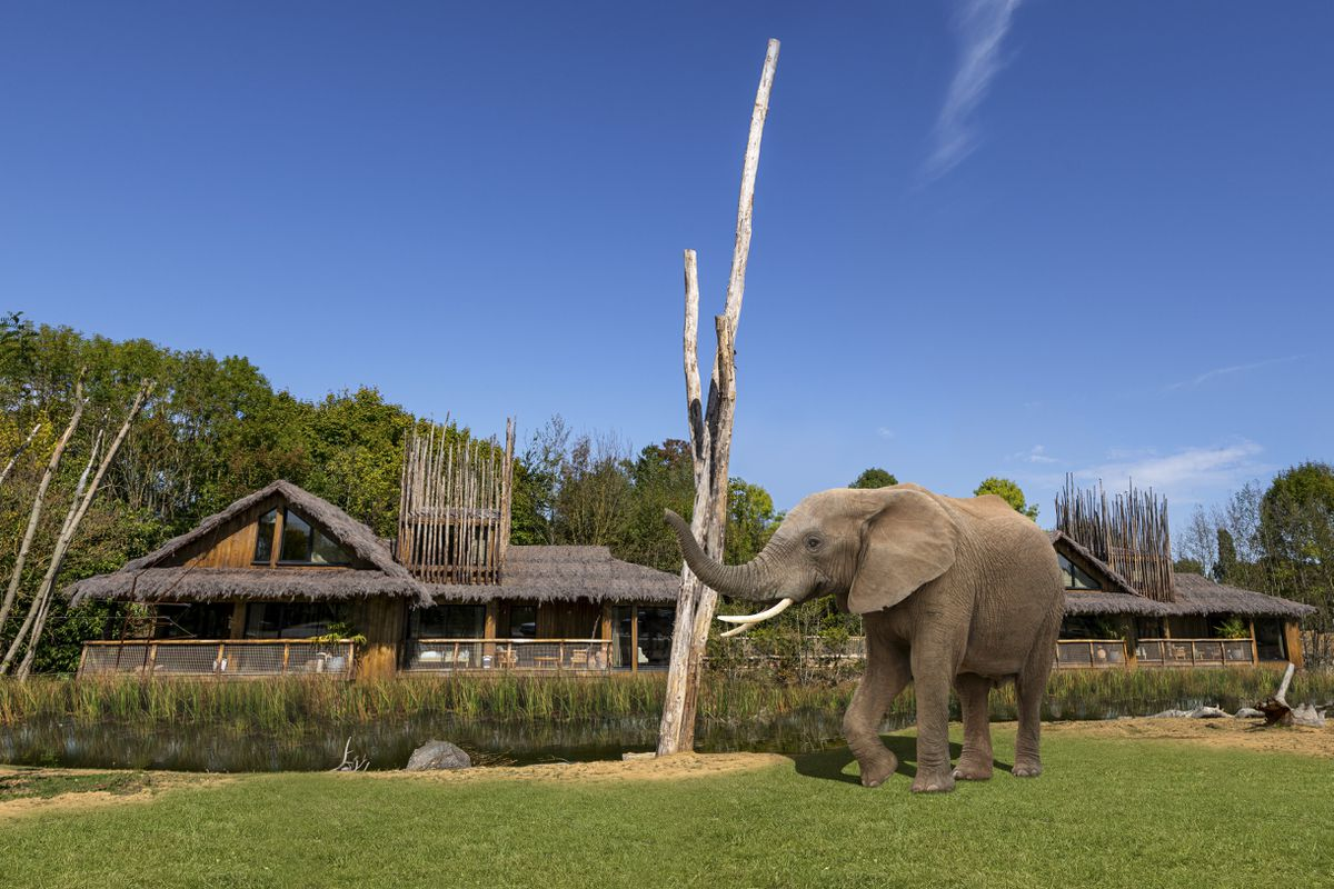 Lodge guests will have exclusive views of the African elephants at the park, shown in this artist impression