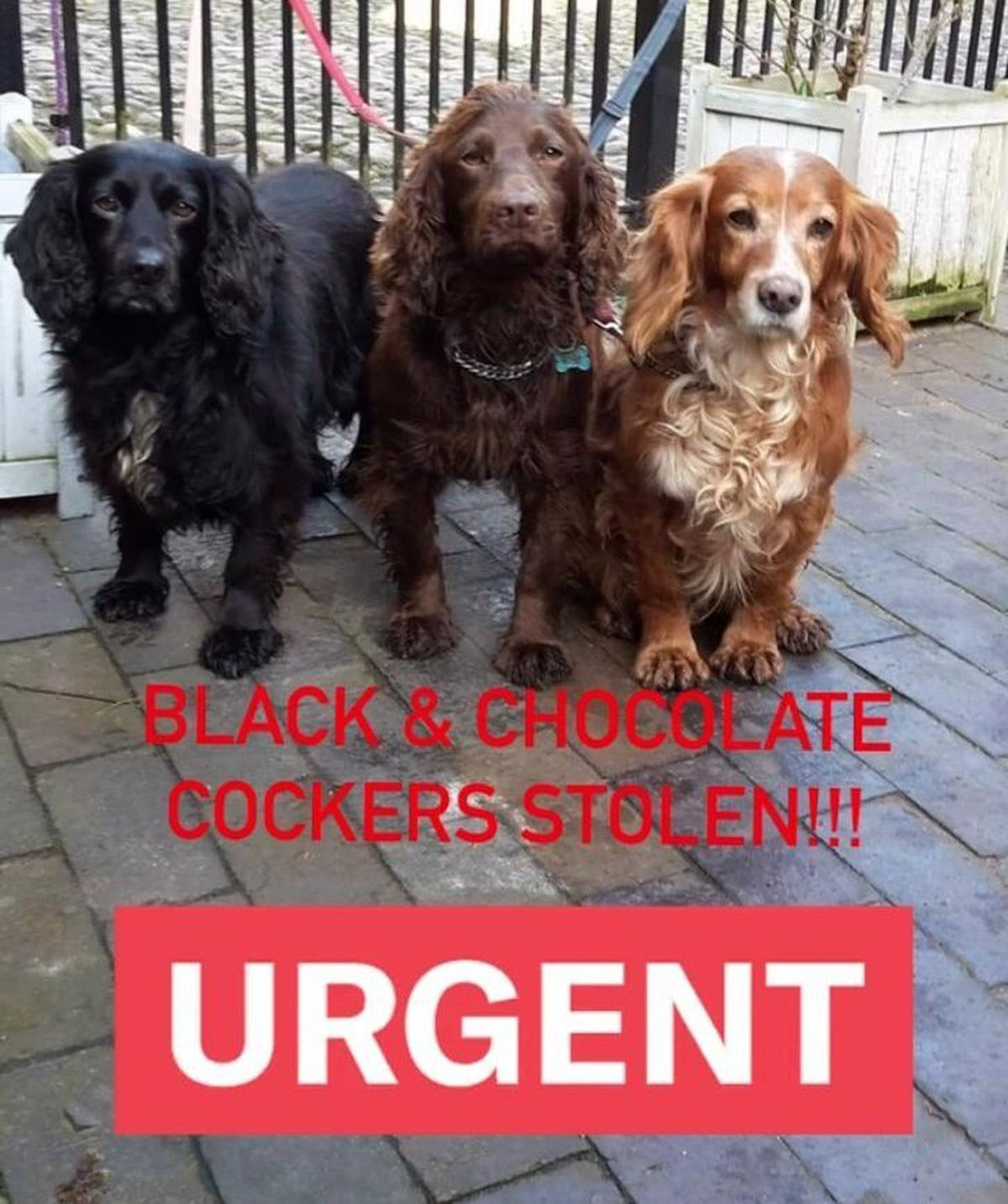Staffordshire Police have published this photo as part of the appeal