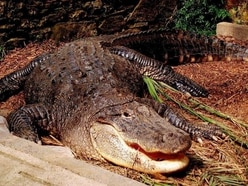 Woman killed by alligator while trying to protect dog