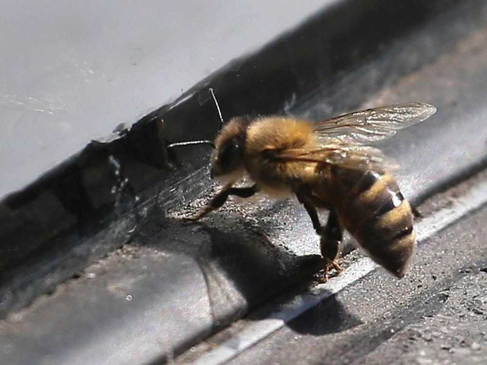 This EU vote could make a huge difference to bees' survival