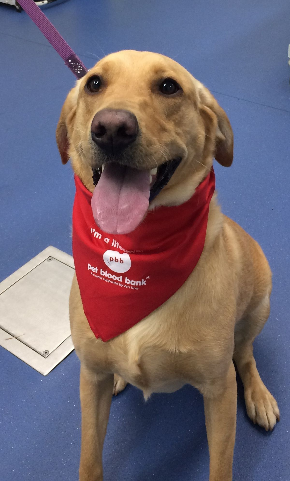 Head Nurse Gemma's dog, Darcey, looking pleased with herself after her fourth donation.
