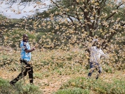 East Africa hit by most serious locust outbreak in 25 years