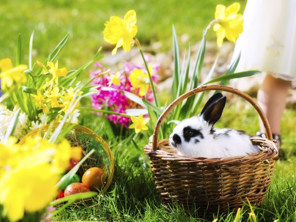 Easter 2018: Test your knowledge on Easter traditions across the world - quiz