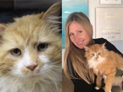 A cat who walked 12 miles only to be rejected by his old owners gets his happy ending