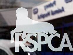 9,000 West Midlands pets abused at Christmas - RSPCA