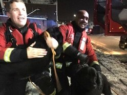 Two dogs rescued from freezing canal in Smethwick