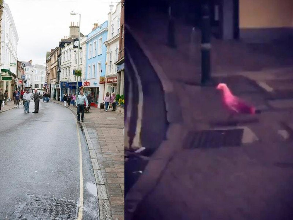A Pink Seagull Is Being Spotted Around Barnstaple Express