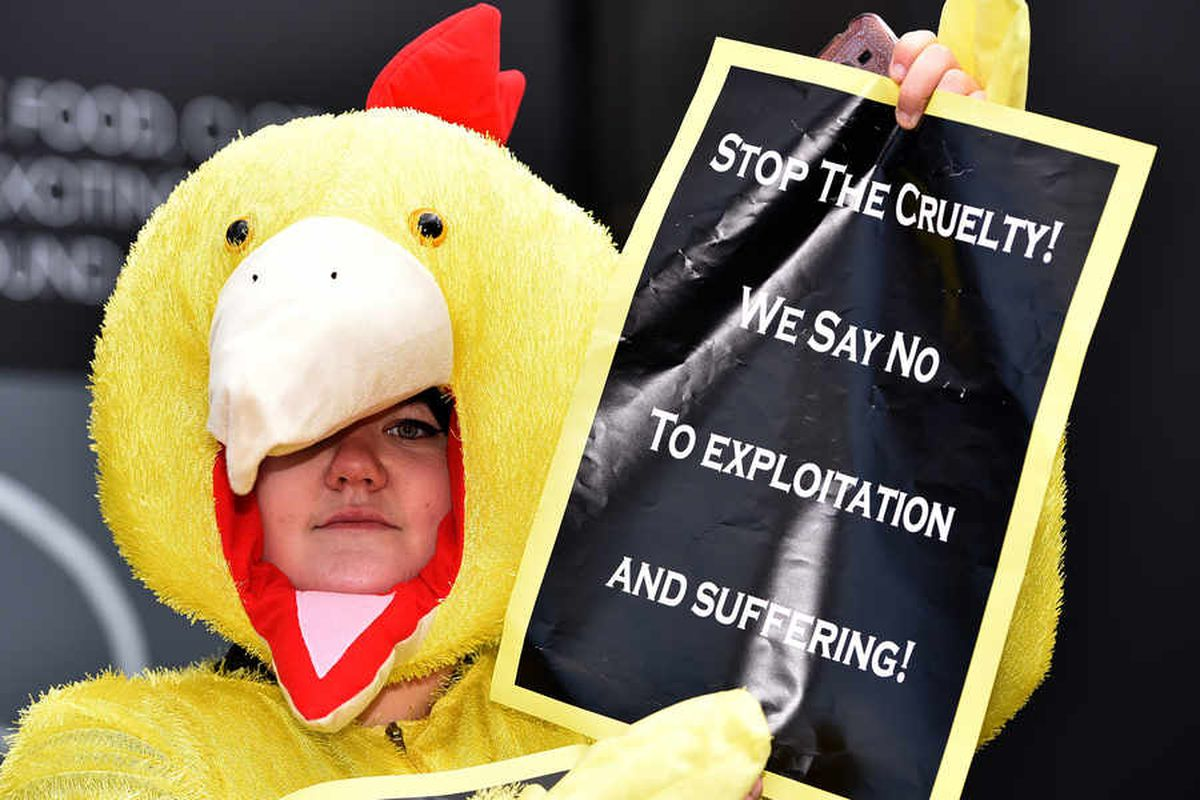 Chicken protesters hit Stafford streets over £6 million battery farm