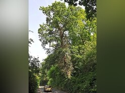 'If one came down it could kill someone': Warning issued on Bridgnorth leaning trees
