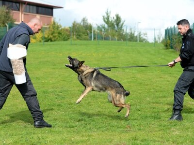 WATCH as Staffordshire Police dog Rox is put through her paces in training
