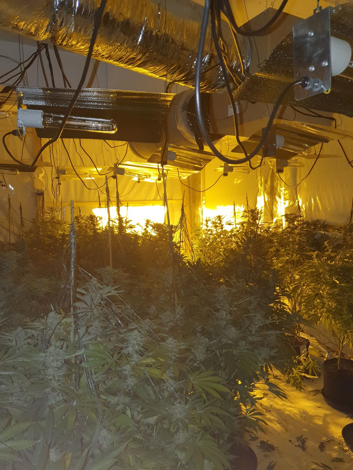 More than 300 plants were found at the address. Photo: St Matthew's Police