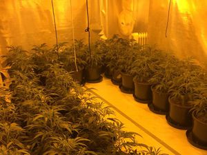 More than 100 cannabis plants were found by police in Wolverhampton
