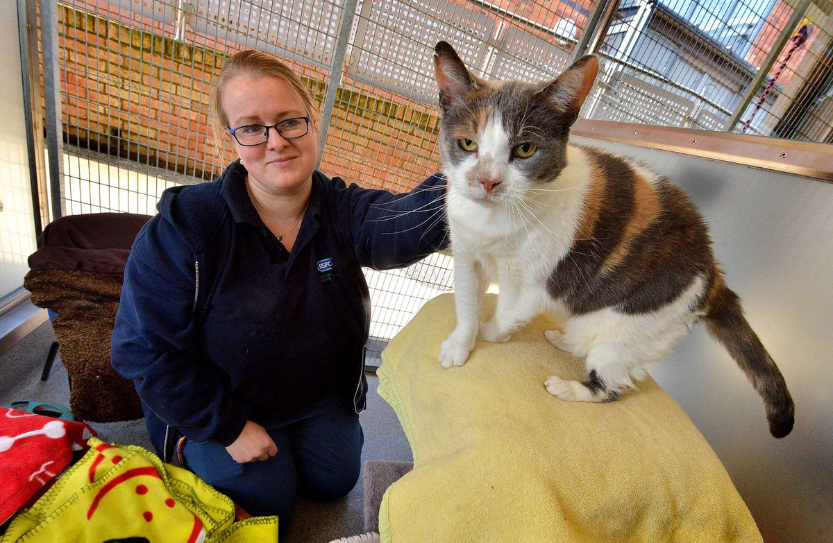Cats are also looked after by the RSPCA. Animal care assistant Sara Szarwinski, from Wordsley, with a cat called Olive, who should be going to a new home very soon