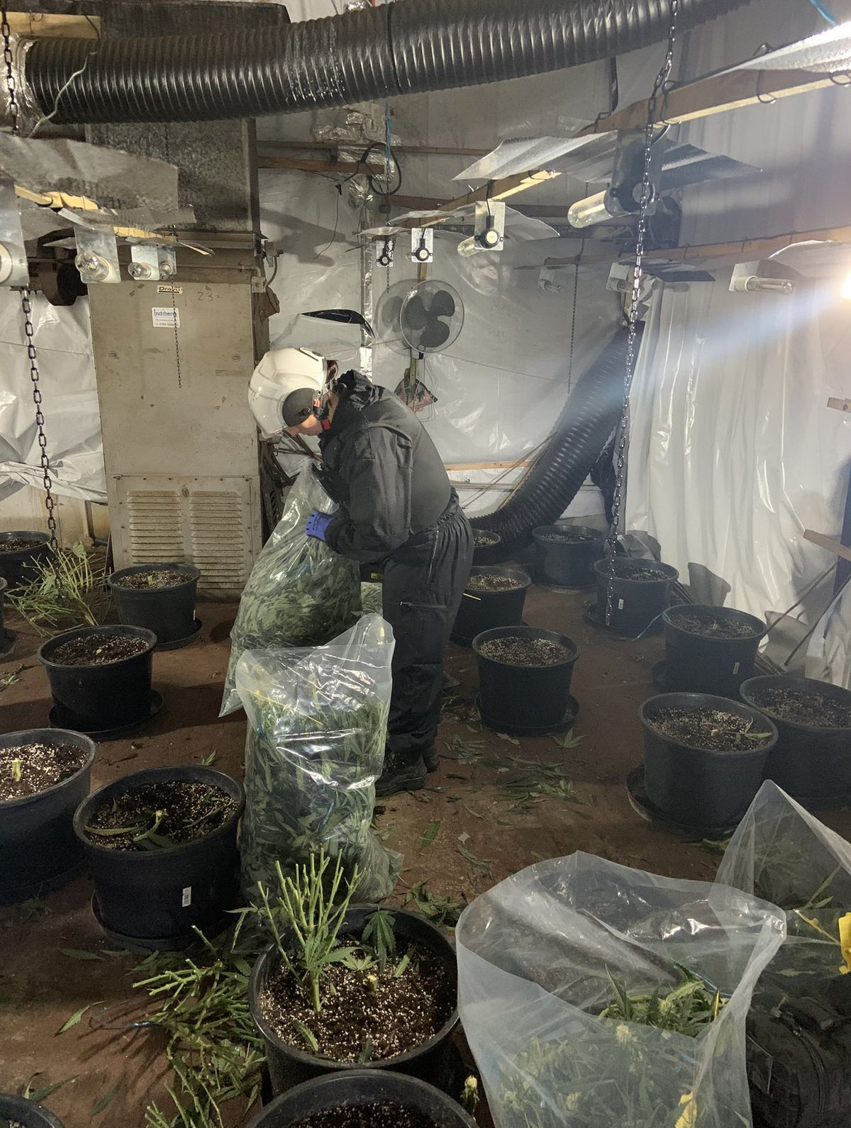 Cannabis disposal officers at the site in Wednesfield