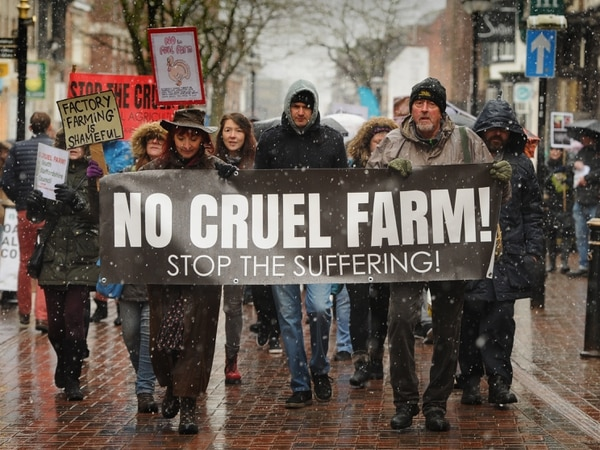 WATCH: Protesters march through Stafford town centre to oppose turkey farm plans