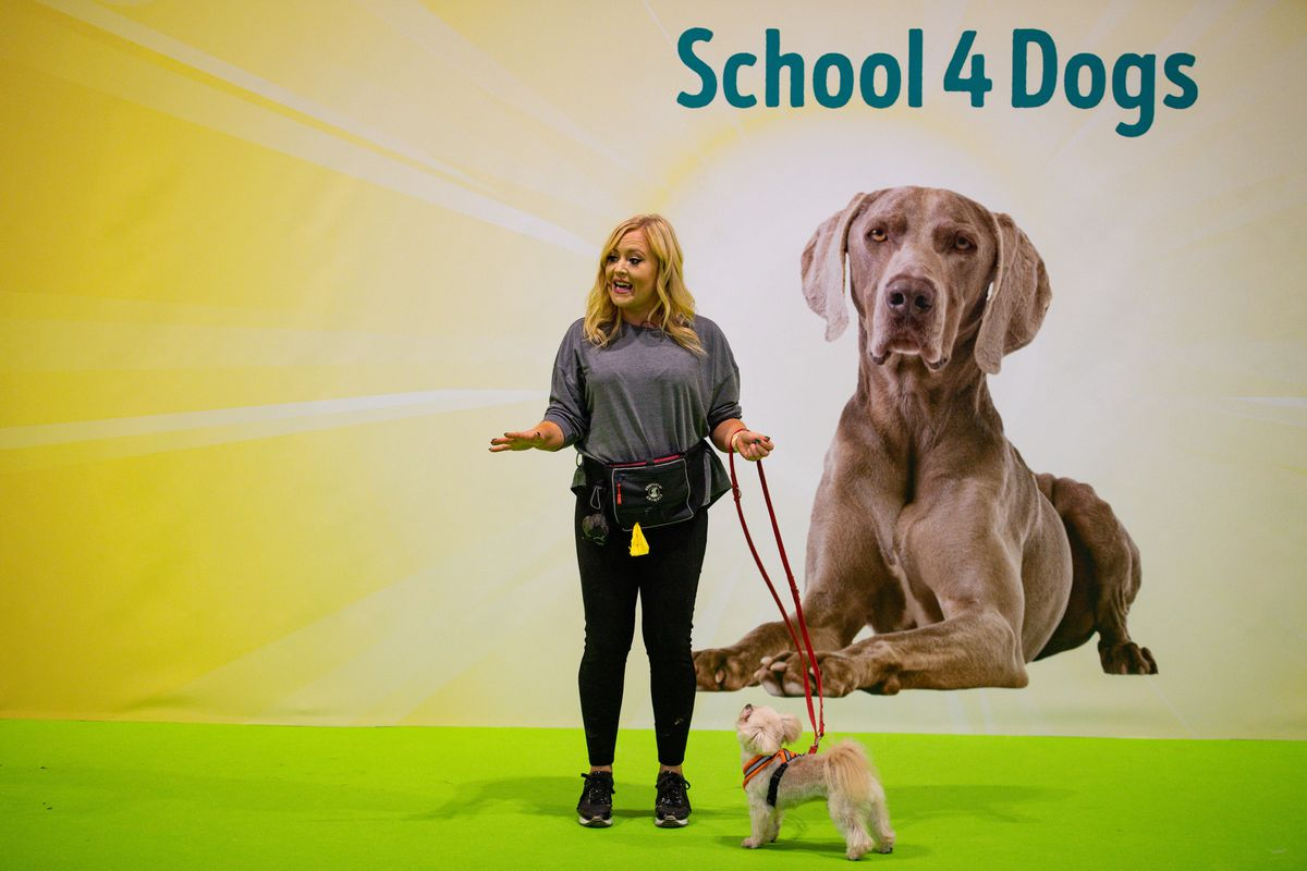 The School 4 Dogs demonstrations at the National Pet Show at the NEC, Birmingham. PA Photo. Picture date: Sunday November 3, 2019.  Photo credit should read: Jacob King/PA Wire.